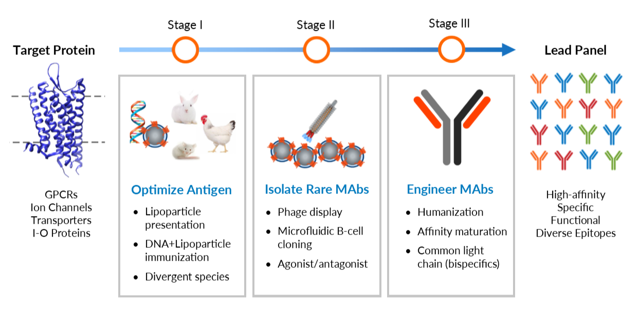 Antibody Discovery - Optimized Expression Image